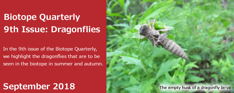 Biotope Quarterly 9th Issue: Dragonflies